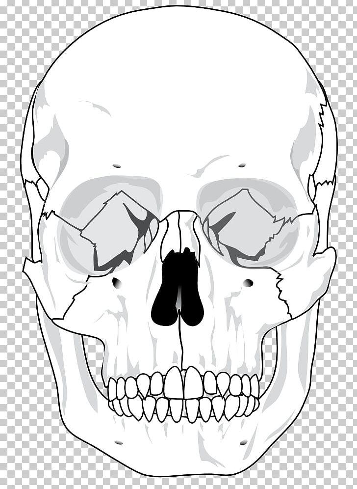 skull human skeleton anatomy bone diagram png, clipart, anatomyskull human skeleton anatomy bone diagram png, clipart, anatomy, area, artwork, black and white,