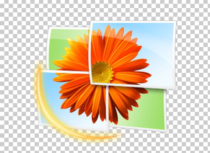 Free Microsoft Cliparts Gallery, Download Free Clip Art, Free Clip Art on  Clipart Library