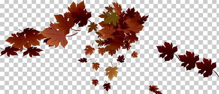Maple Leaf Autumn PNG, Clipart, Autumn, Autumn Leaves, Autumn Tree, Blade, Defoliation Free PNG Download