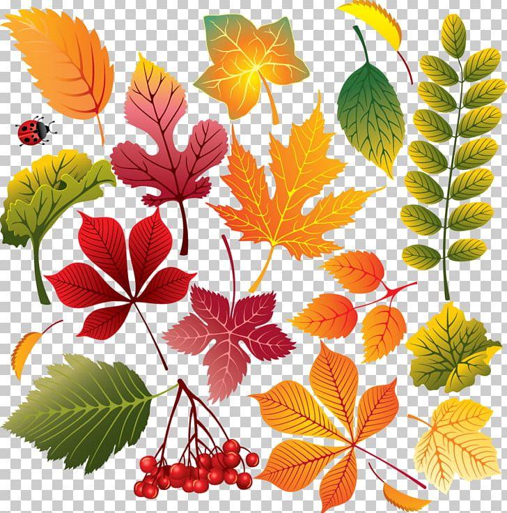 Autumn Leaf Color Autumn Leaf Color Maple Leaf PNG, Clipart, Autumn, Autumn Leaf Color, Branch, Cdr, Chrysanths Free PNG Download