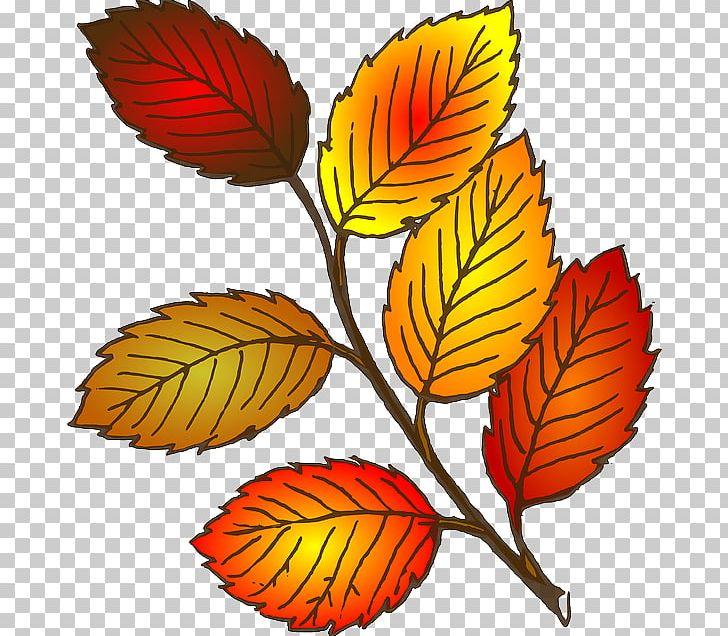 Autumn Leaf Color PNG, Clipart, Artwork, Autumn, Autumn Leaf Color, Autumn Leaves, Branch Free PNG Download