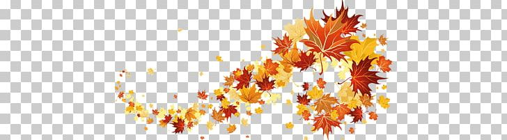 Autumn Leaves PNG, Clipart, Leaves, Nature Free PNG Download