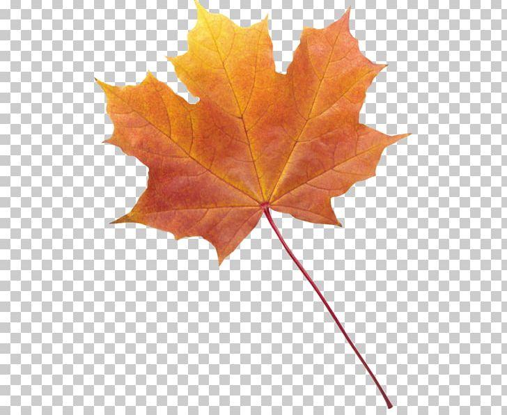 Autumn Leaf Color Desktop PNG, Clipart, Autumn, Autumn Leaf Color, Desktop Wallpaper, Leaf, Maple Leaf Free PNG Download