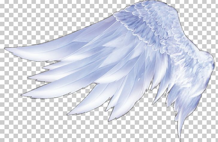 Angel Wings Angel Wings Feather PNG, Clipart, 3d Computer Graphics, Angel Wing, Angel Wings, Beak, Bird Free PNG Download