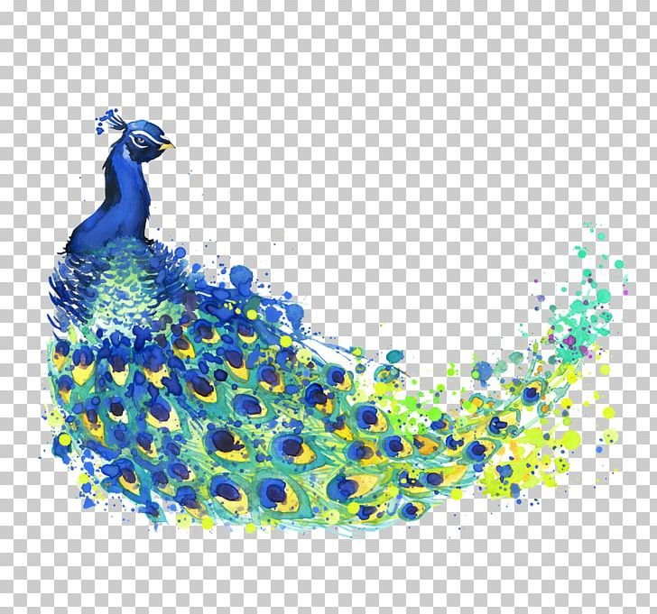 The Peacock Feather Peafowl Drawing Watercolor Painting Illustration PNG, Clipart, Animals, Bird, Cartoon, Color, Feather Free PNG Download