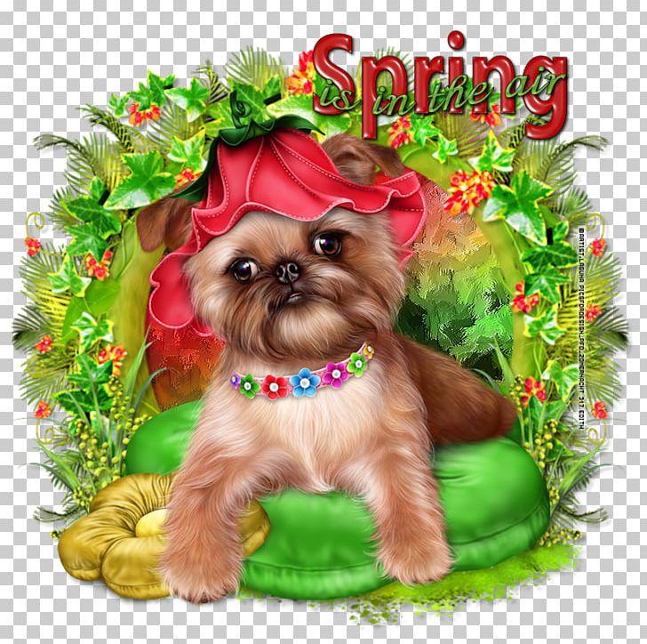 Yorkshire Terrier Cairn Terrier Morkie Shih Tzu Puppy PNG, Clipart