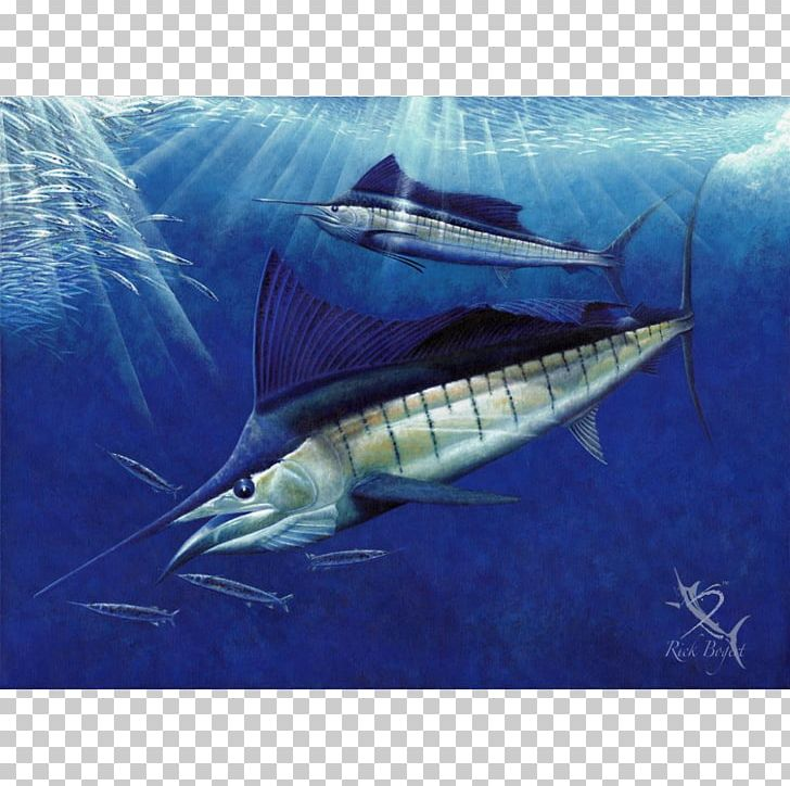 Swordfish Sailfish Atlantic Blue Marlin White Marlin Fin PNG