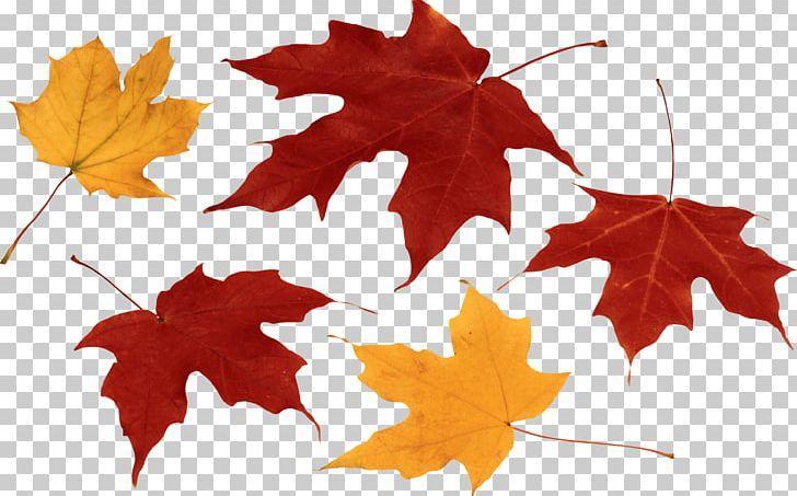 Autumn Leaf Color PNG, Clipart, Autumn, Autumn Leaf Color, Color, Desktop Wallpaper, Flowering Plant Free PNG Download