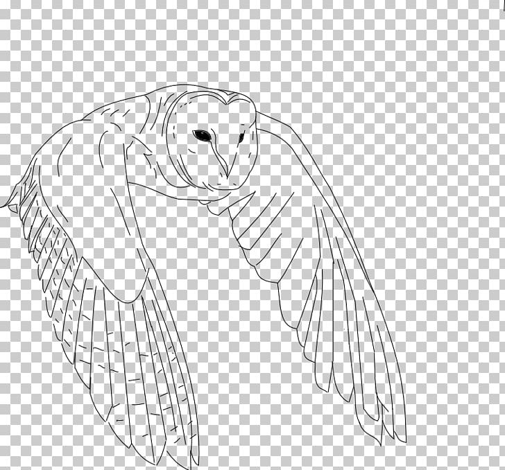 Bird Drawing Owl Line Art PNG, Clipart, Angle, Animal, Animals, Arm, Artwork Free PNG Download