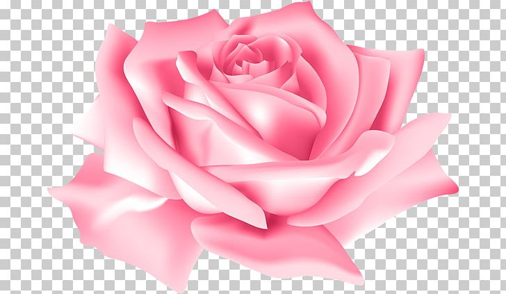 Rose Portable Network Graphics Flower PNG, Clipart, Blue Rose, China Rose, Clip Art, Closeup, Cut Flowers Free PNG Download
