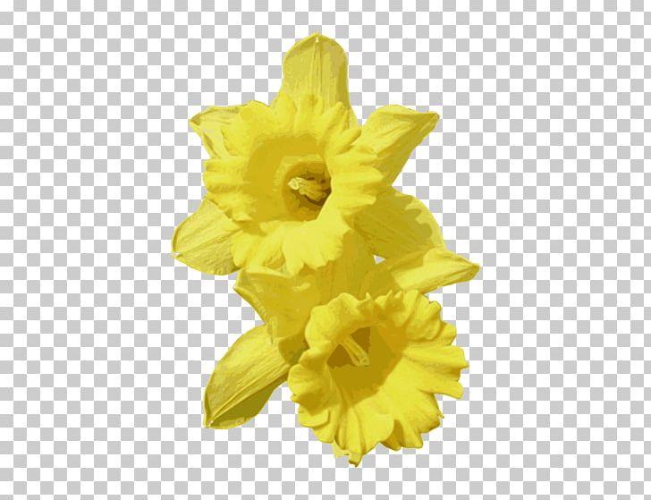 Daffodil PNG, Clipart, Blog, Clip Art, Cut Flowers, Daffodil, Daffodils Free PNG Download