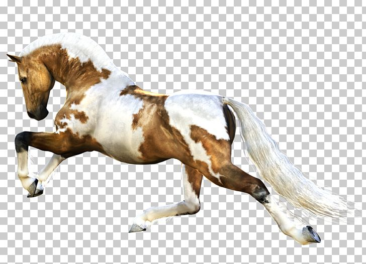 Horse Computer File PNG, Clipart, Akitainu, American Paint Horse, Amor, Animals, Biology Free PNG Download