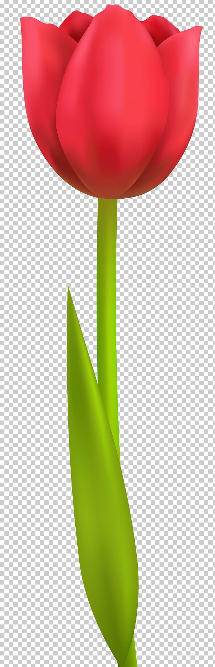 The Tulip: The Story Of A Flower That Has Made Men Mad Computer File PNG, Clipart, Blog, Clip Art, Clipart, Color, Computer File Free PNG Download