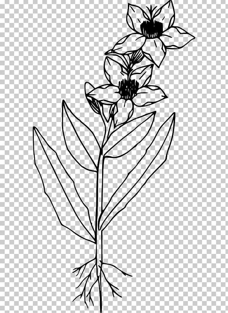Line Art Drawing PNG, Clipart, Arts, Artwork, Black And White, Branch, Brush Footed Butterfly Free PNG Download