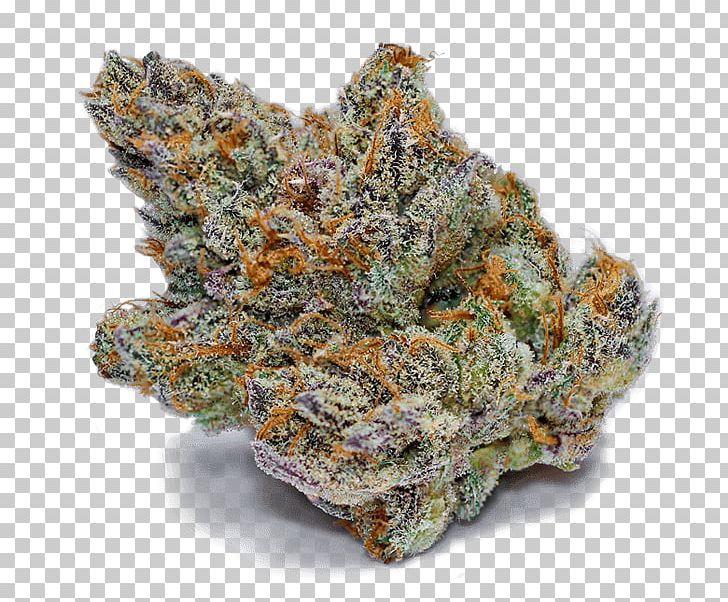 Theory Wellness: Medical Marijuana Dispensary MA Medical