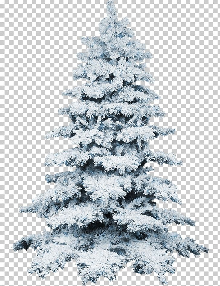 White Christmas Tree Png.Christmas Tree Snow Png Clipart Black And White Christmas