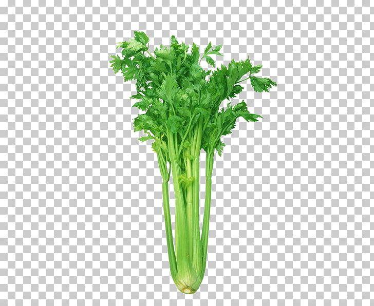 Celeriac Leaf Celery Organic Food Vegetable Health PNG, Clipart, Apium, Cartoon, Cartoon Vegetable Material, Celery, Chard Free PNG Download