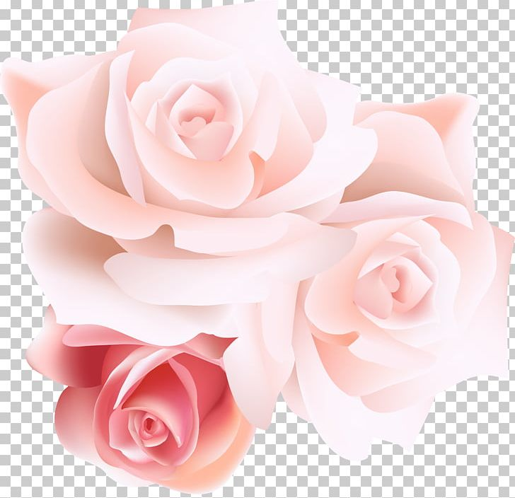 Garden Roses Centifolia Roses Beach Rose Pink PNG, Clipart, Ado, Artificial Flower, Color, Flower, Flower Arranging Free PNG Download