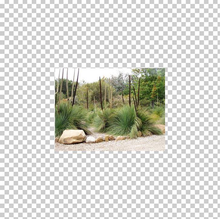 Landscape Xanthorrhoea Preissii Plant Community Native Plant
