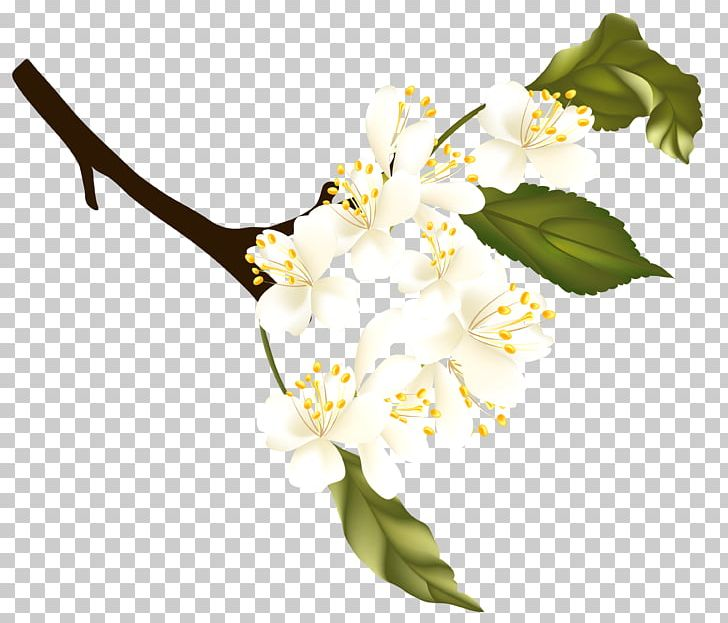 Spring PNG, Clipart, Auglis, Autumn, Blossom, Branch, Clipart Free PNG Download