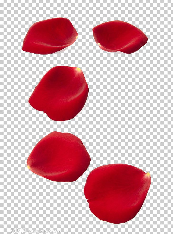 Rose Petal Stock Photography Shutterstock PNG, Clipart, Clip