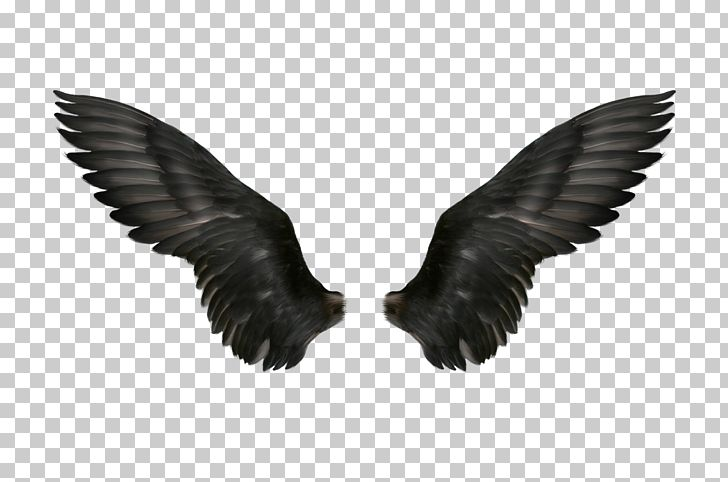 Black Hair Photography Black White PNG, Clipart, Angel Wings, Background Black, Beak, Black, Black And White Free PNG Download