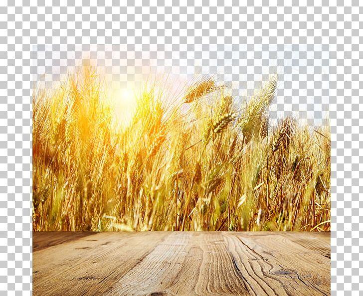 Wheat field. Farm landscape. Vector background Clipart Image