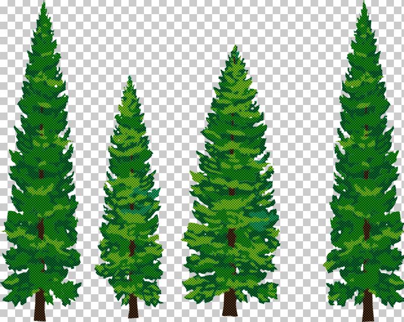 Shortleaf Black Spruce Balsam Fir Yellow Fir Oregon Pine Canadian Fir PNG, Clipart, American Larch, Balsam Fir, Biome, Canadian Fir, Colorado Spruce Free PNG Download