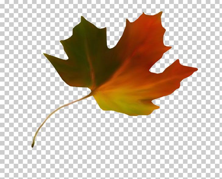 Maple Leaf Autumn Leaf Color Sugar Maple PNG, Clipart, Autumn, Autumn Leaf Color, Breathing, Flower, Green Free PNG Download
