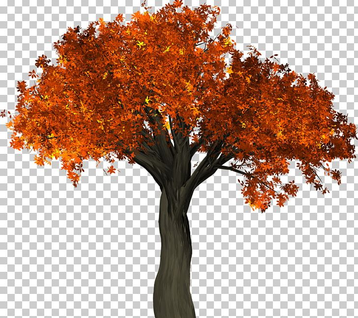 Tree Autumn Leaf Color Trunk PNG, Clipart, Autumn, Autumn Leaf Color, Branch, Color, Conservation Free PNG Download