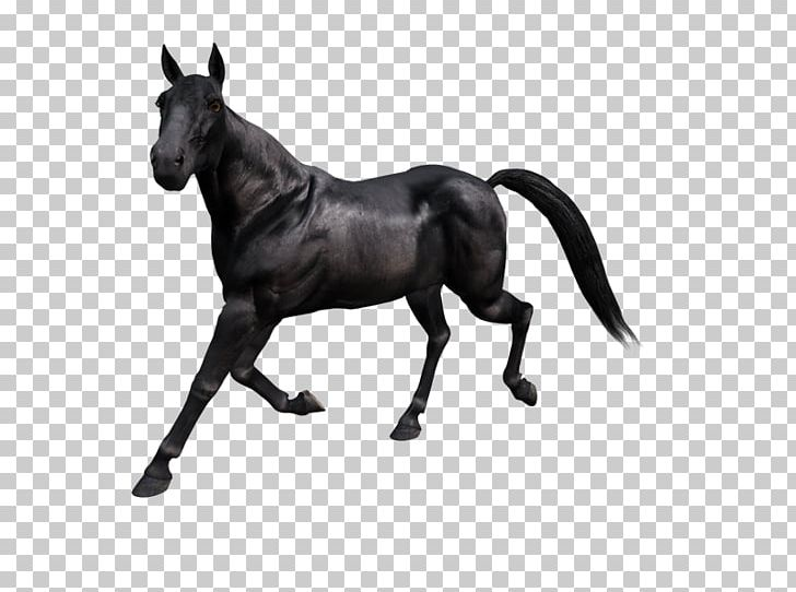 Mustang Stallion Rein Mare Halter PNG, Clipart, Animal Figure, Black And White, Bridle, Cabal, Halter Free PNG Download