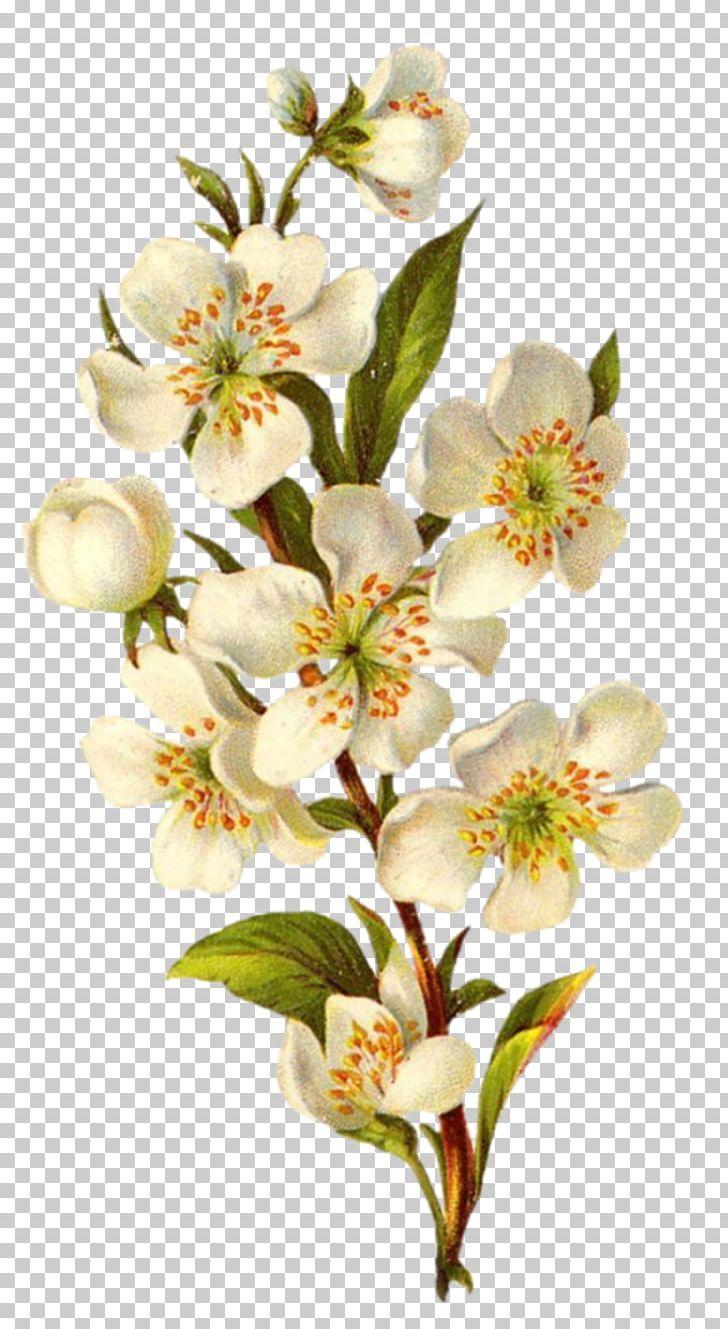 Flower Vintage Clothing Floral Design PNG, Clipart, Alstroemeriaceae, Antique, Blossom, Botanical Flowers, Branch Free PNG Download