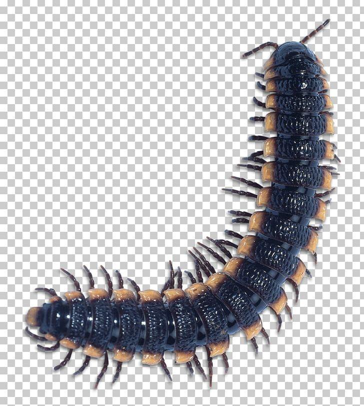 centipede free download