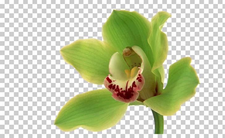 Orchids Flower Bouquet Desktop Green PNG, Clipart, Black, Desktop Wallpaper, Floral Design, Floristry, Flower Free PNG Download