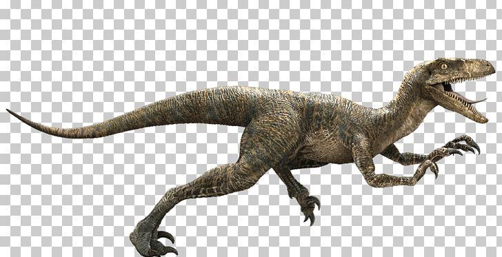 Jurassic Park Velociraptor Deinonychus Late Cretaceous Dinosaur PNG, Clipart, Deinonychus, Dinosaur, Drawing, Dromaeosauridae, Extinction Free PNG Download