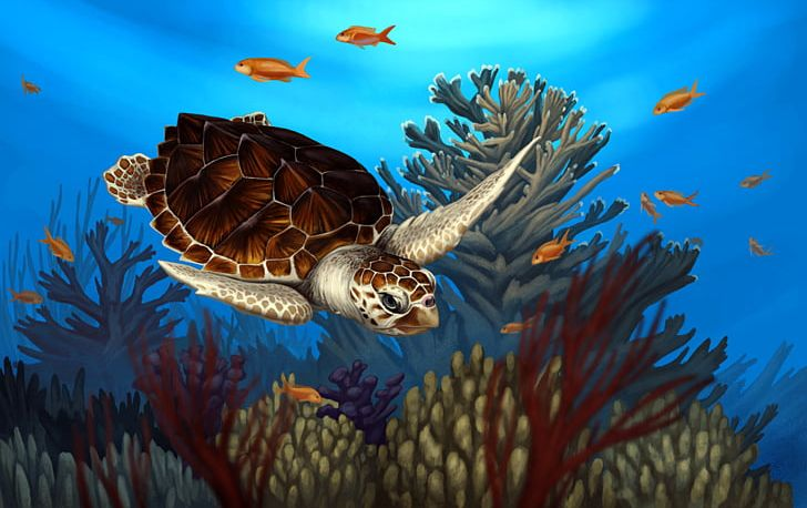 Loggerhead Sea Turtle Reptile Coral Reef PNG, Clipart, Animal, Animals, Computer Wallpaper, Coral, Coral Re Free PNG Download
