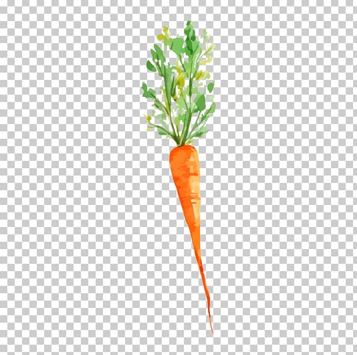 Vegetable Watercolor Painting Carrot Drawing Png Clipart