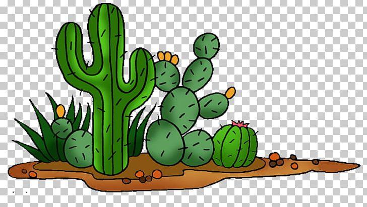 Cactaceae Saguaro Prickly Pear PNG, Clipart, Ball, Cactus