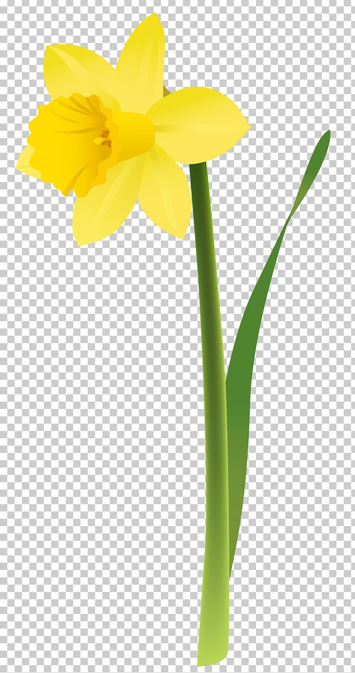 Daffodil Floral Design Cut Flowers Yellow PNG, Clipart, Amaryllis, Amaryllis Family, Art, Bulb, Cut Flowers Free PNG Download