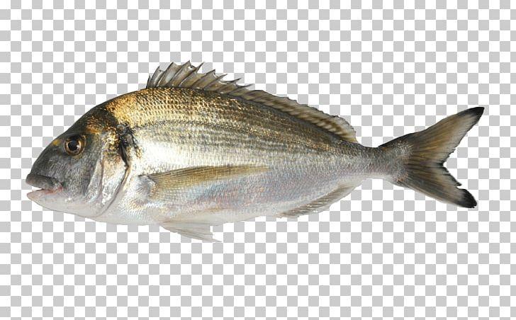 Oily Fish Gilt-head Bream Aquaculture Agriculture PNG, Clipart, Agriculture, Animal Source Foods, Aquaculture, Atlantic Cod, Barramundi Free PNG Download
