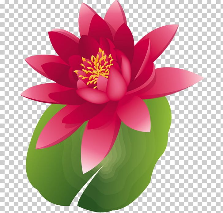 Nelumbo Nucifera Water Lily Water Lilies PNG, Clipart, Aquatic Plant, Clip Art, Flora, Flower, Flowering Plant Free PNG Download