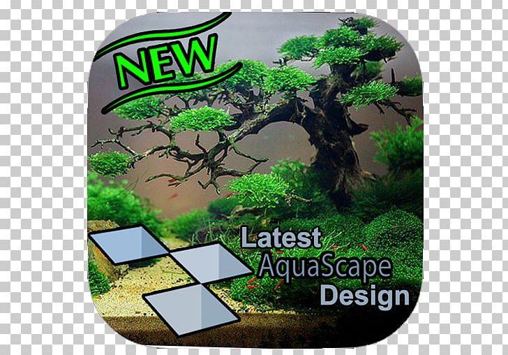 Aquascaping Reef Aquarium Nano Aquarium Fish Live Png Clipart Animals Apk Aquarium Aquariums Aquascape Free Png
