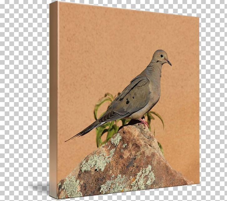 Finches Beak Columbidae American Sparrows Fauna PNG, Clipart, American Sparrows, Beak, Bird, Columbidae, Emberizidae Free PNG Download