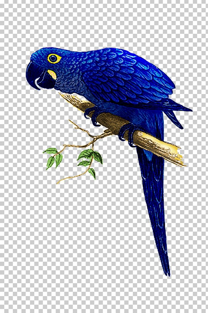 Hyacinth Macaw The Speaking Parrots: A Scientific Manual Bird PNG, Clipart, Bird, Hyacinth Macaw, Manual, Parrot, Parrots Free PNG Download