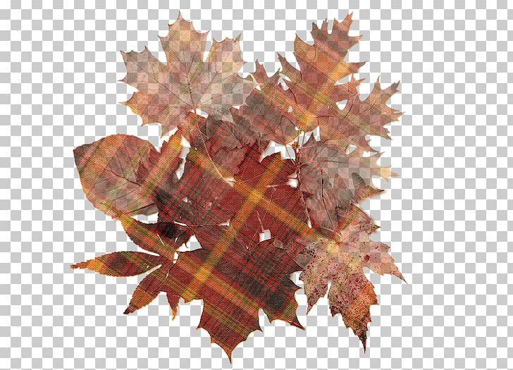 Autumn Leaf Color Desktop PNG, Clipart, Art, Autumn, Autumn Leaf Color, Collage, Computer Free PNG Download