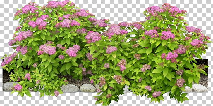 Flowering Plant Shrub PNG, Clipart, Animation, Annual Plant, Bushes