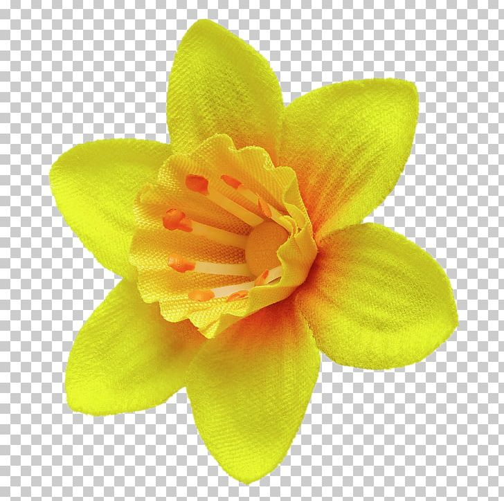 Great Daffodil Appeal Flower Marie Curie PNG, Clipart, Amaryllis Family, Birth Flower, Daffodil, Drawing, Flower Free PNG Download