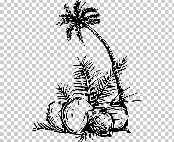 Coloring Book Arecaceae Coconut Tree Fruit PNG, Clipart ...