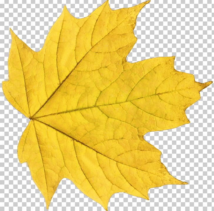 Autumn Leaf Color Yellow PNG, Clipart, Autumn, Autumn Leaf Color, Color, Computer Icons, Display Resolution Free PNG Download