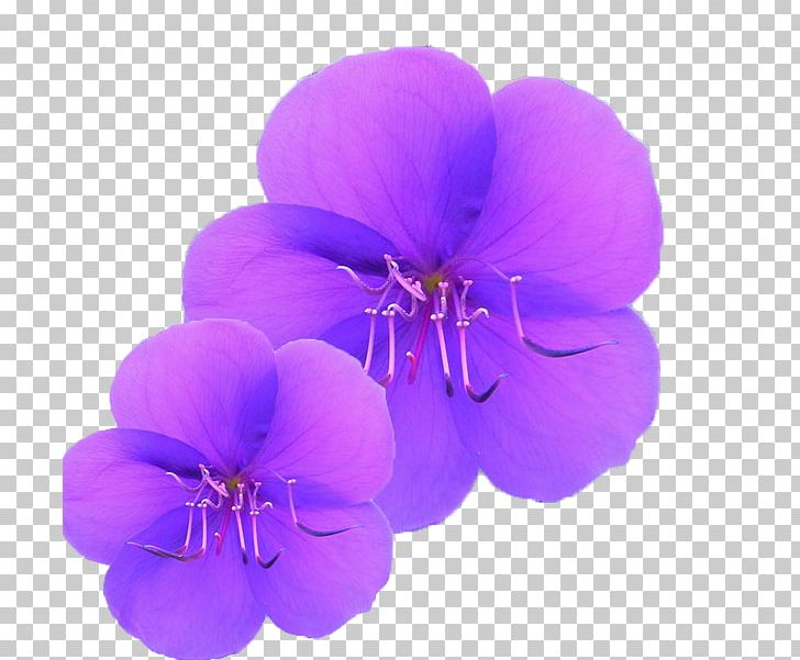 Purple Orchid PNG, Clipart, Art, Beautiful, Encapsulated Postscript, Flower, Flowers Free PNG Download